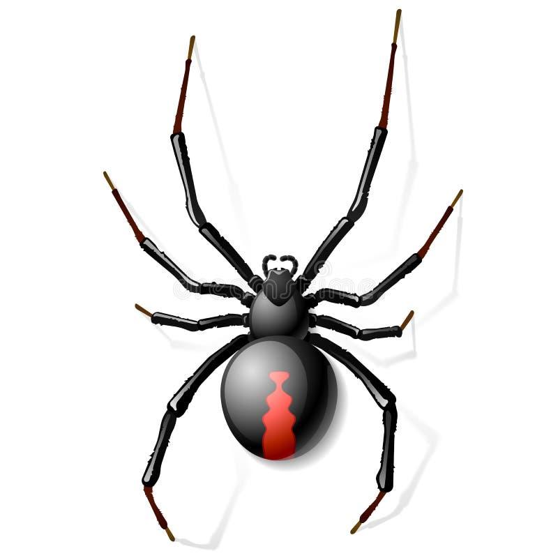 Czarny Wdowi pająk ilustracji