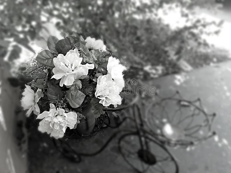 czarny white fotografia royalty free