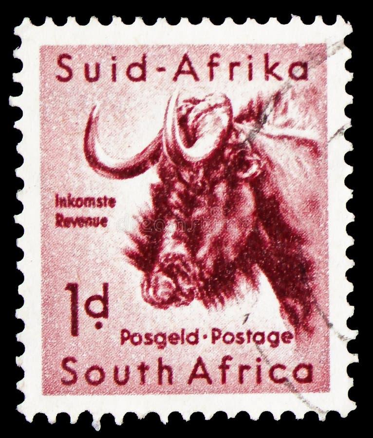 Czarny Wildebeest Connochaetes gnou, południe - afrykańska przyroda, Kruger serii Parkowy seria około 1954, fotografia stock