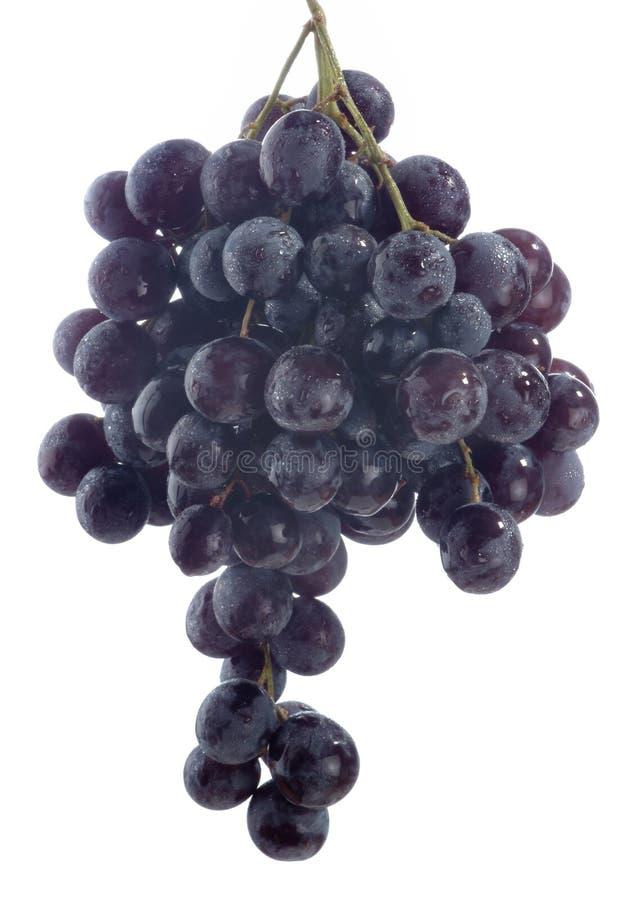 czarny winogron obraz stock
