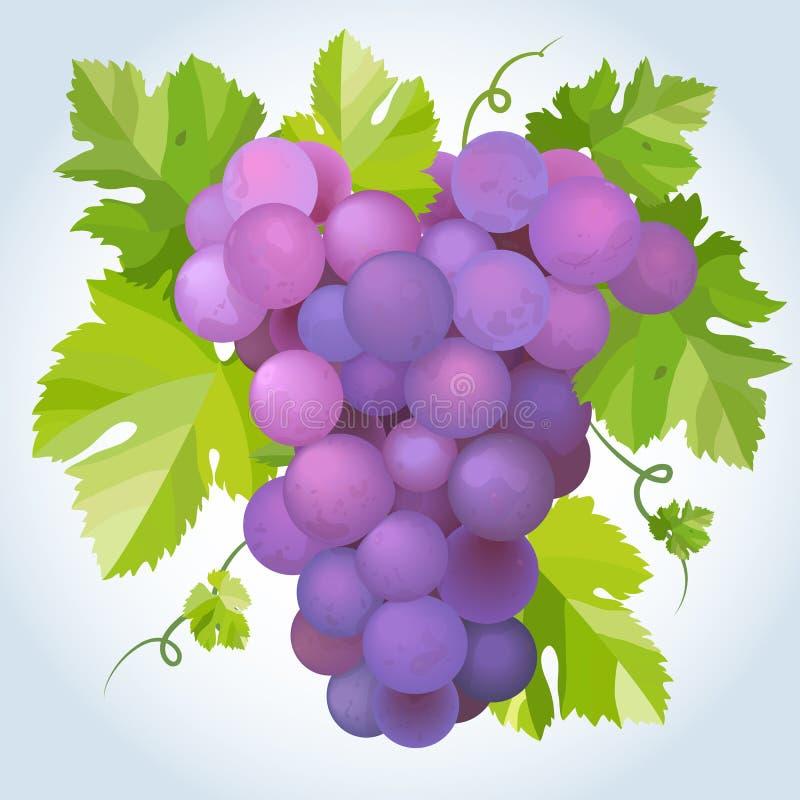 czarny winogrona ilustracja wektor