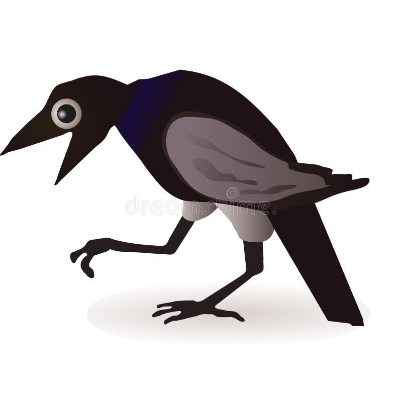 Czarny wrona odizolowywająca na biały tle ilustracji