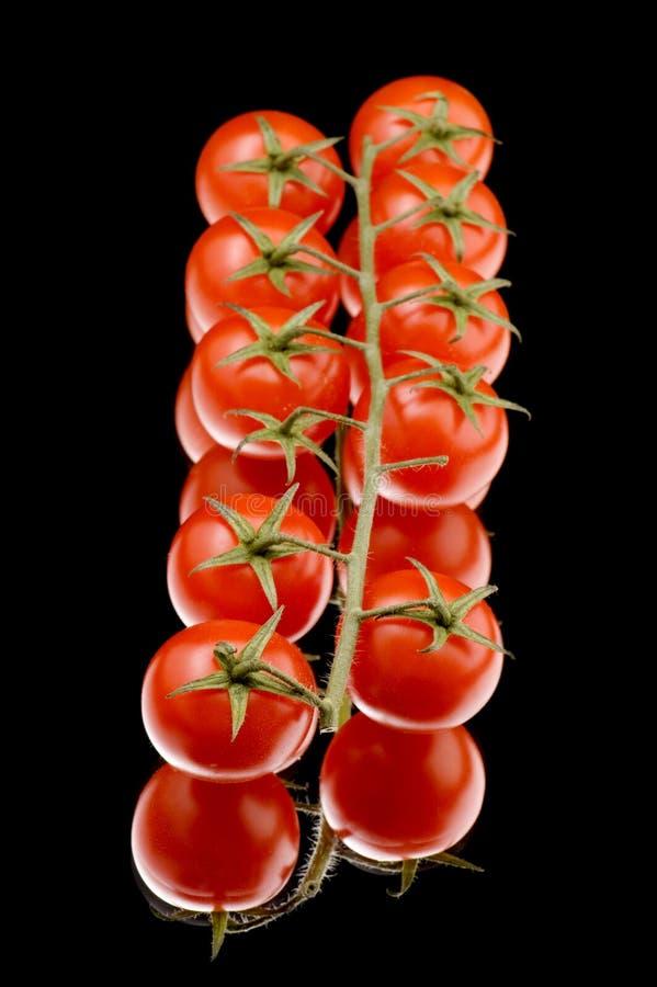 czarny zbliżenia dojrzały pomidor obraz royalty free