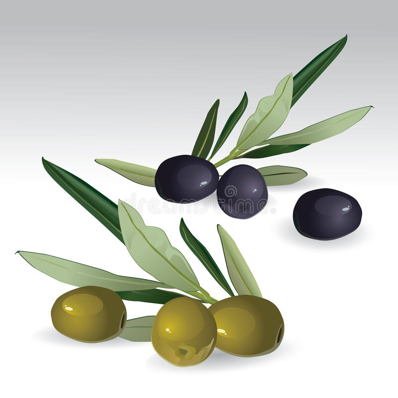 czarny zieleni odosobnione oliwki royalty ilustracja