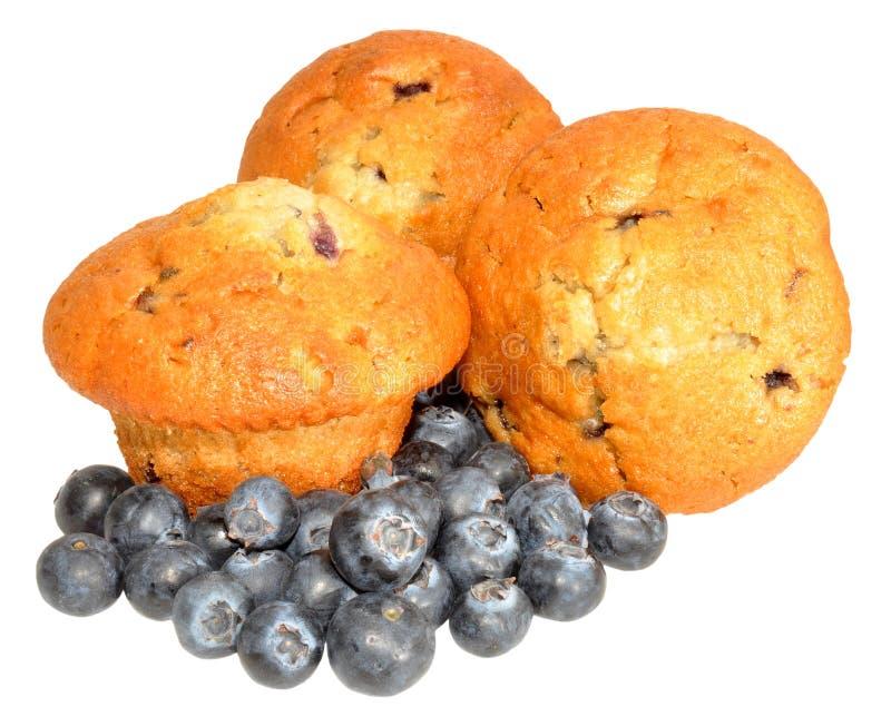 czarnych jagod czarnej jagody świezi muffins obraz royalty free