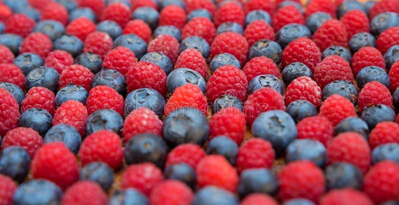 Czarnych jagod i malinek boczny widok obrazy stock