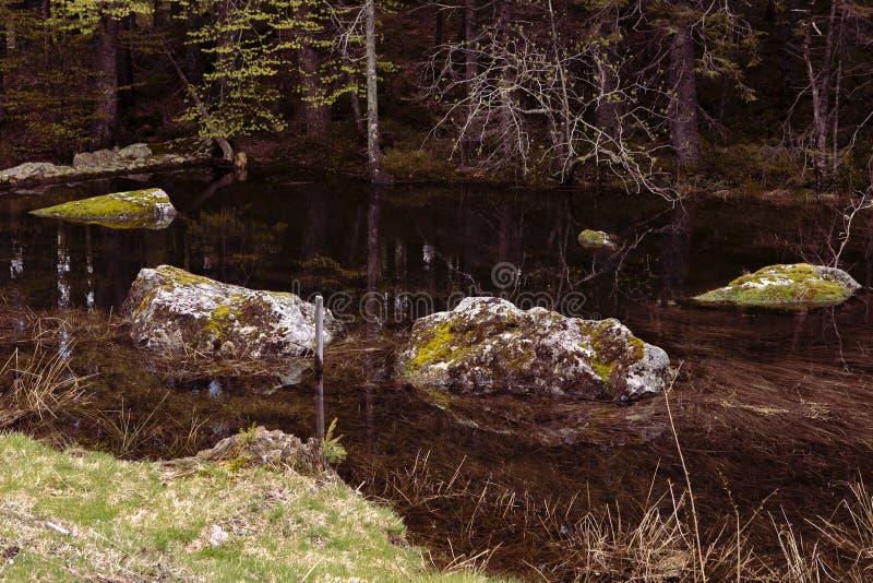 czarodziejka krajobraz Mechate skały w lasowym jeziorze, bagażniki drzewa Wciąż woda, zanurzający kamienie, ciemność Odbicia wewn zdjęcia stock