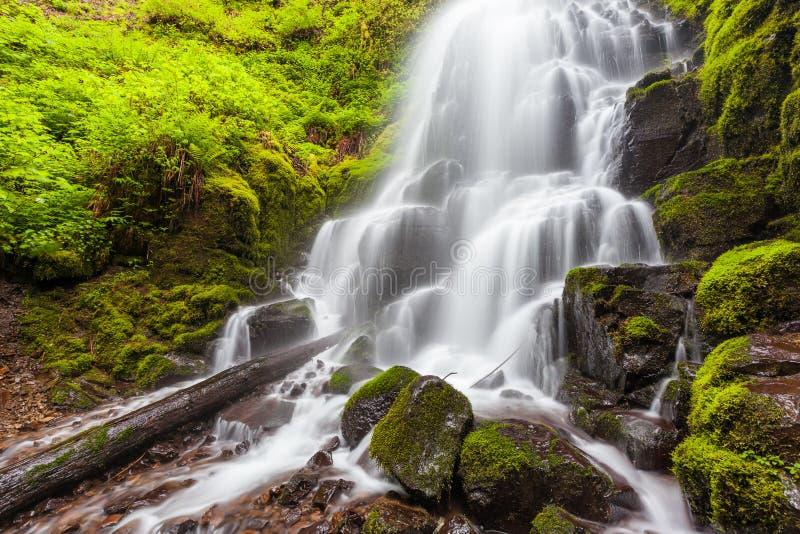 Czarodziejka spada w Kolumbia Rzecznym wąwozie, Oregon zdjęcie royalty free