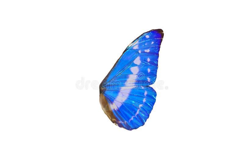 czarodziejscy skrzydła zdjęcie stock