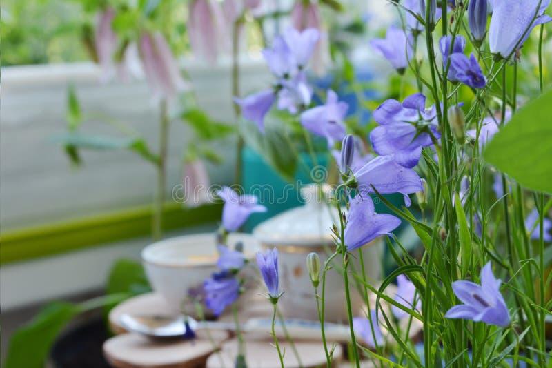 Czarodziejski śniadanie w kwitnącym bellflowers ogródzie Czuli fiołkowi kwiaty kampanula na zamazanym tle zdjęcia royalty free