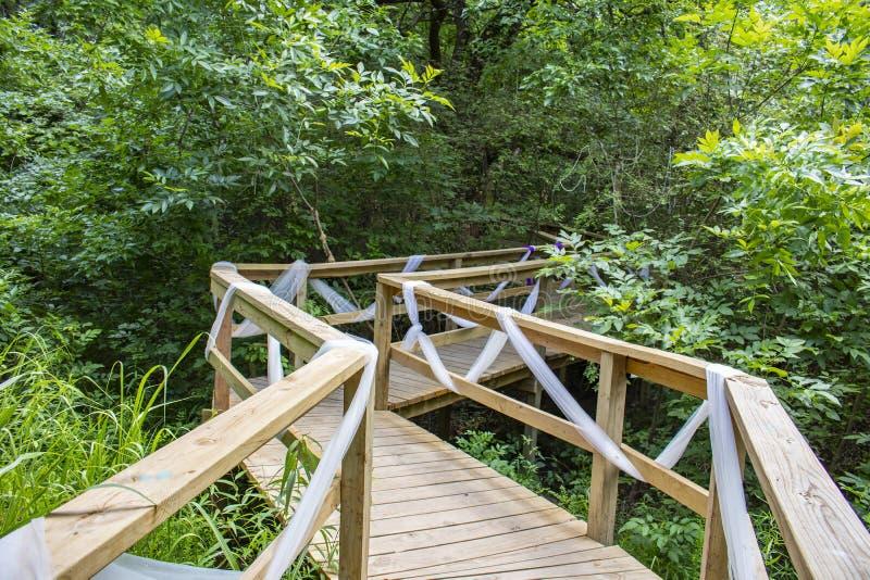 Czarodziejski boardwalk w magicznego las - drewniany nastroszony przejście dekorujący z filmy tkaniną zgina swój sposób w drzewa  obrazy stock