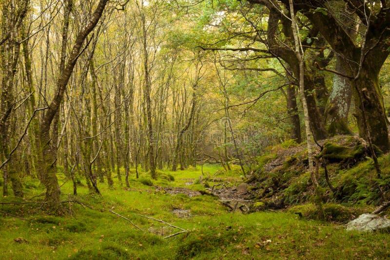 czarodziejski las zdjęcia royalty free