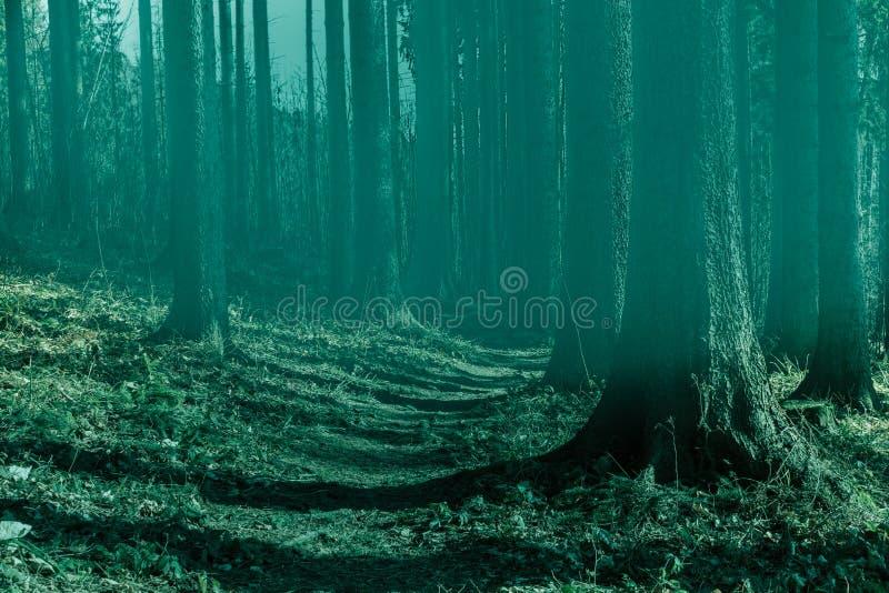 Czarodziejski las w mgle Spadków drewna Zaczarowany jesień las w mgle w ranku stare drzewo Krajobraz z drzewo kolorową zielenią fotografia royalty free