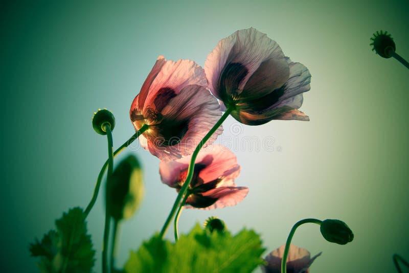 Czarować kwiaty obraz stock