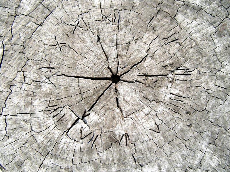 czas drewna