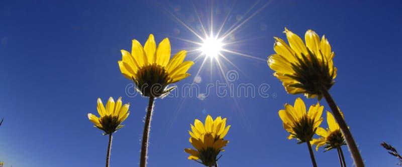 czas letni kwiaty obrazy stock