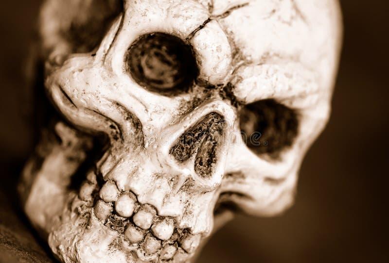 czaszka zdjęcia royalty free