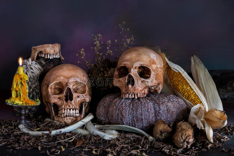 czaszka obrazy stock