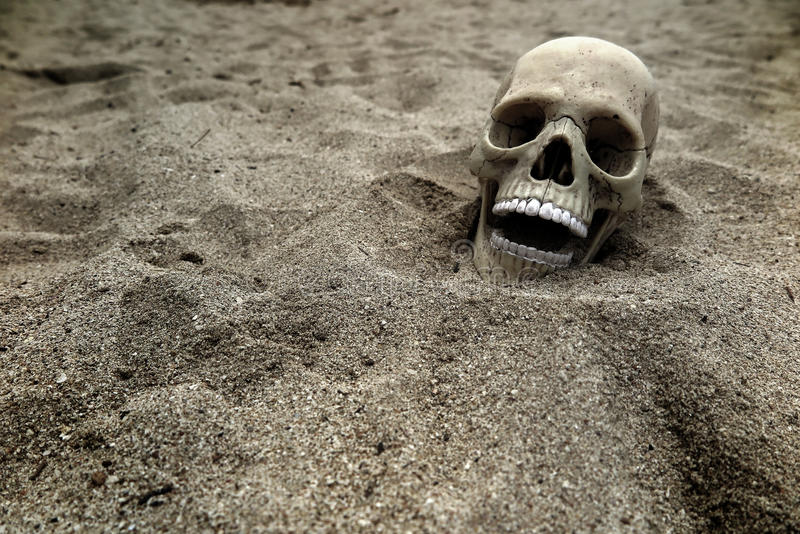 czaszka zdjęcie royalty free
