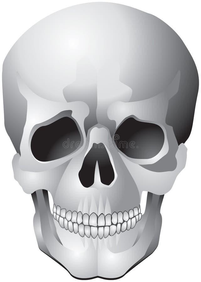 czaszka ludzki ilustracyjny realistyczny wektor ilustracja wektor