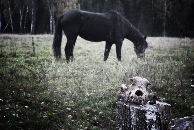 Czaszka na tle koń goniec śmierć zdjęcia stock