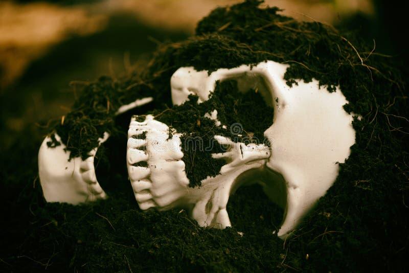 Czaszka na ziemi ziemi tle - strasznego grunge czaszki rocznika ludzki styl obraz royalty free