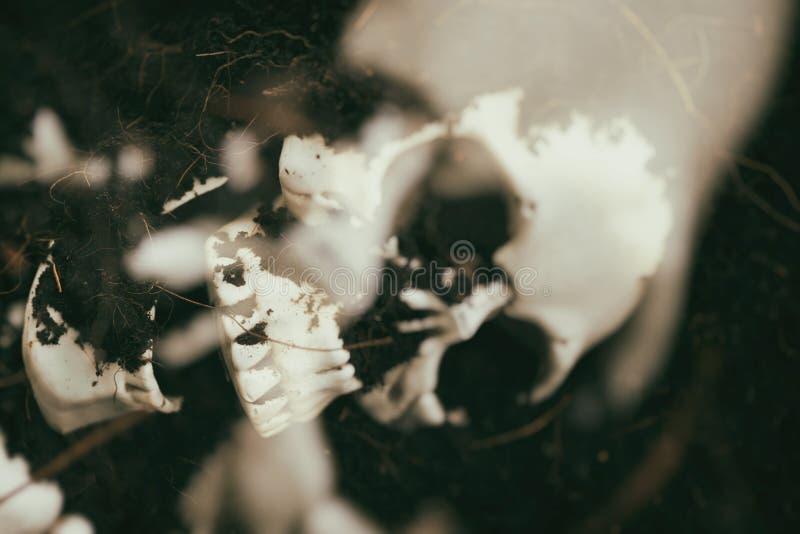Czaszka na ziemi ziemi tle - strasznego grunge czaszki rocznika ludzki styl z plama filtrem zdjęcie royalty free