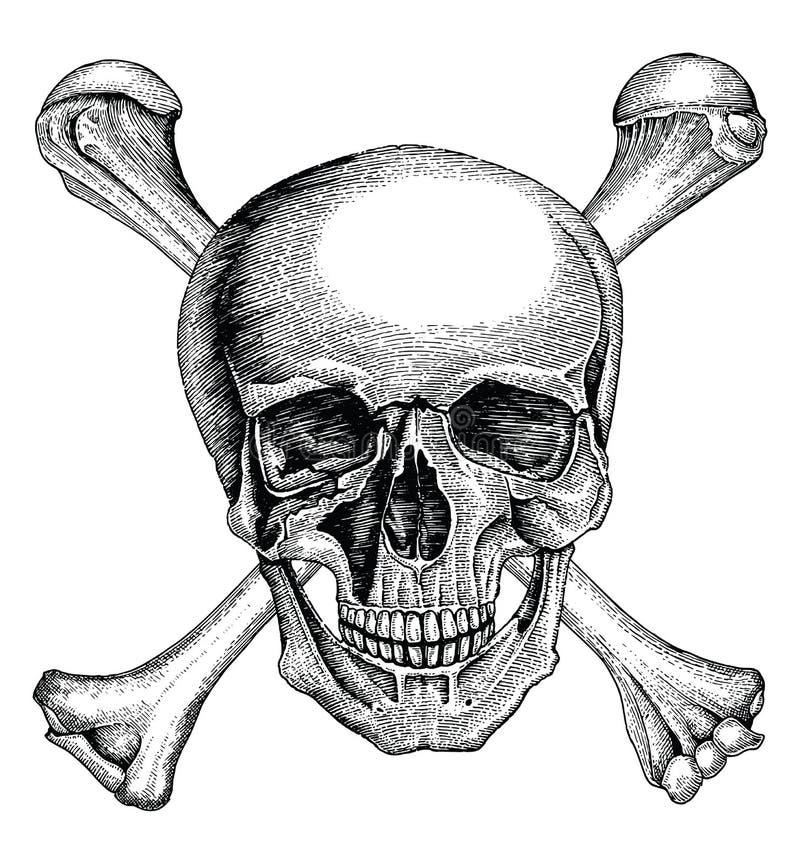Czaszka z krzyżować kościami, pirata symbol, logo ręki rysunkowy rocznik royalty ilustracja
