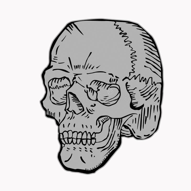 Download Czaszki grey ilustracja wektor. Obraz złożonej z odosobniony - 27334055