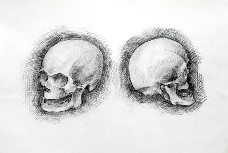 Czaszki nauki rysunek papier ołówek obrazy royalty free