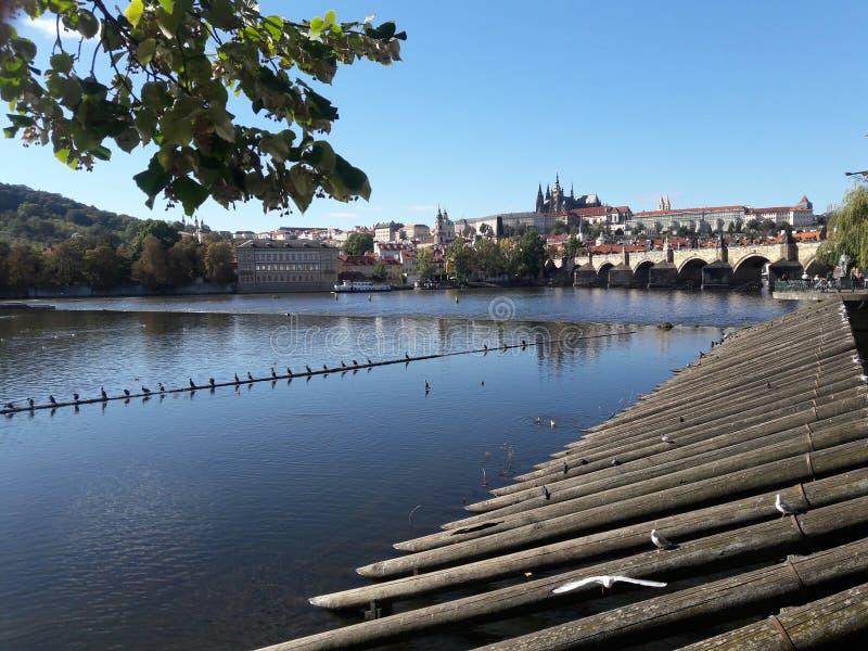 Czcathedral-Kirche Stadt des Tourismus Prag-Kathedrale Hauptstadt gotischer gesetzte tschechische im heißen Sommer in Mitteleurop stockbild