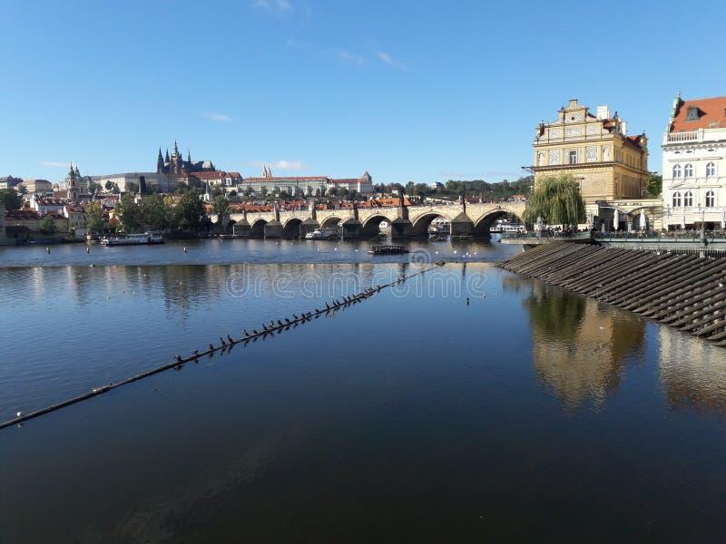Czcathedral-Kirche Stadt des Tourismus Prag-Kathedrale Hauptstadt gotischer gesetzte tschechische im heißen Sommer in Mitteleurop stockfotos