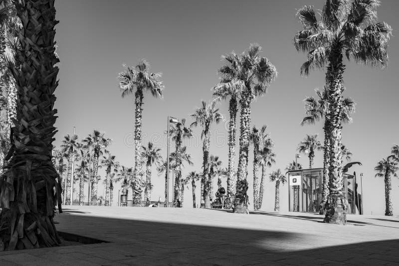 Czczość wśród palm na Barca wybrzeżu zdjęcie stock