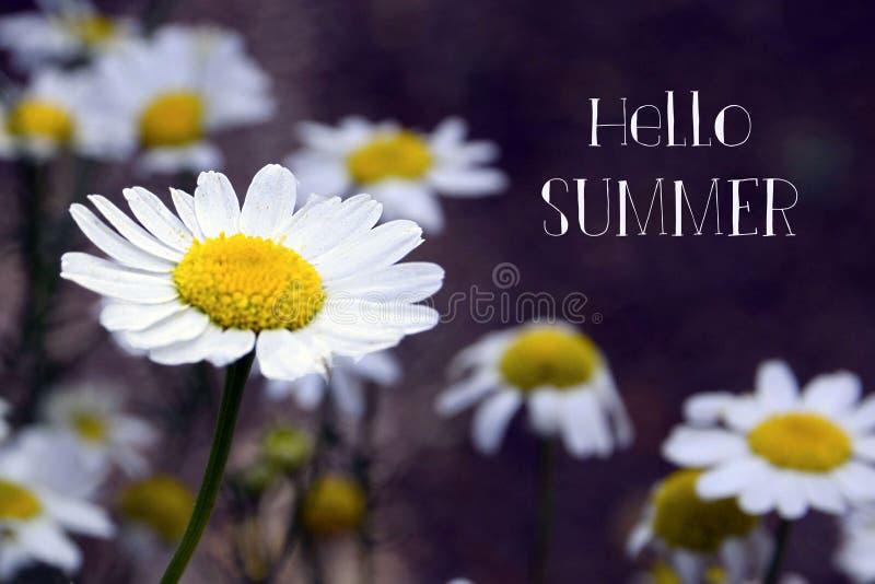 Cześć lata kartka z pozdrowieniami z rumianków kwiatów dorośnięciem na łące Lata pojęcie obrazy stock