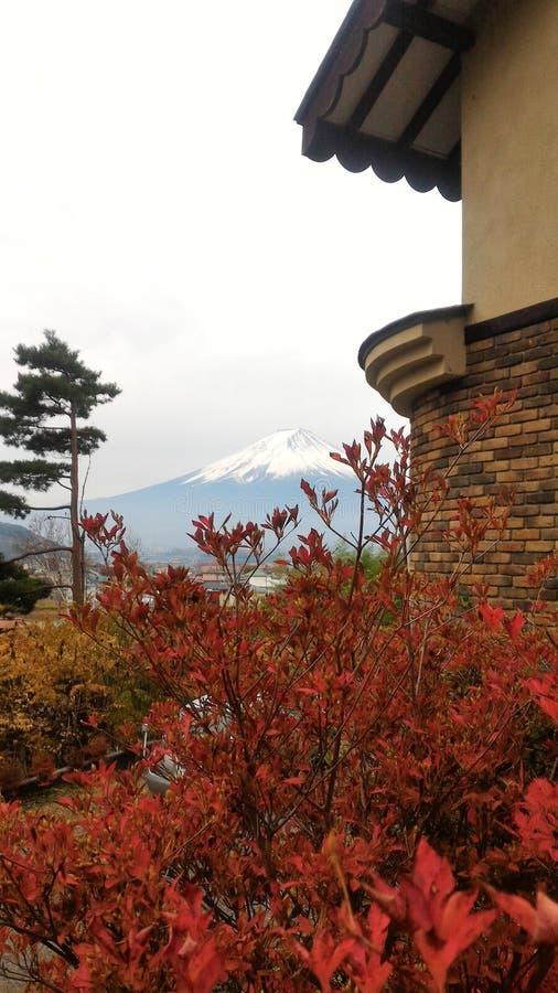 cześć mr Kumak Fuji San obrazy stock