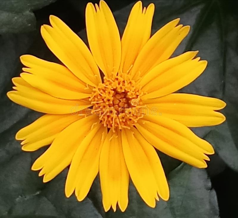 cześć 1Natural kwiat fotografia stock