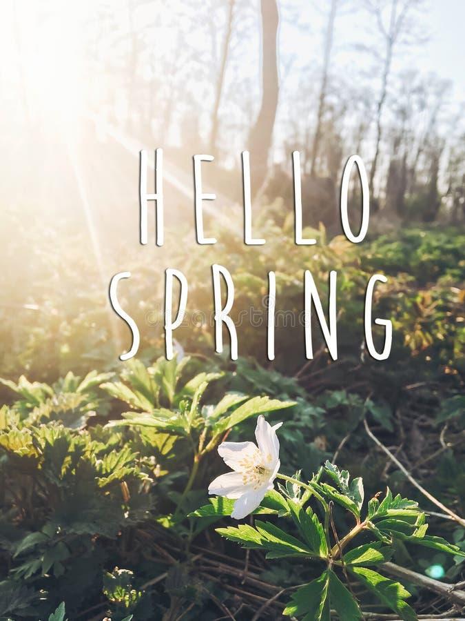 Cześć wiosna teksta znak na pięknego kwitnącego anemonu pierwszy sprin zdjęcia royalty free