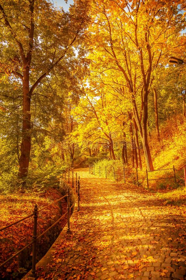 Czech Autumn. Photograph of a path in autumn sunny day in Czech Republic stock photography