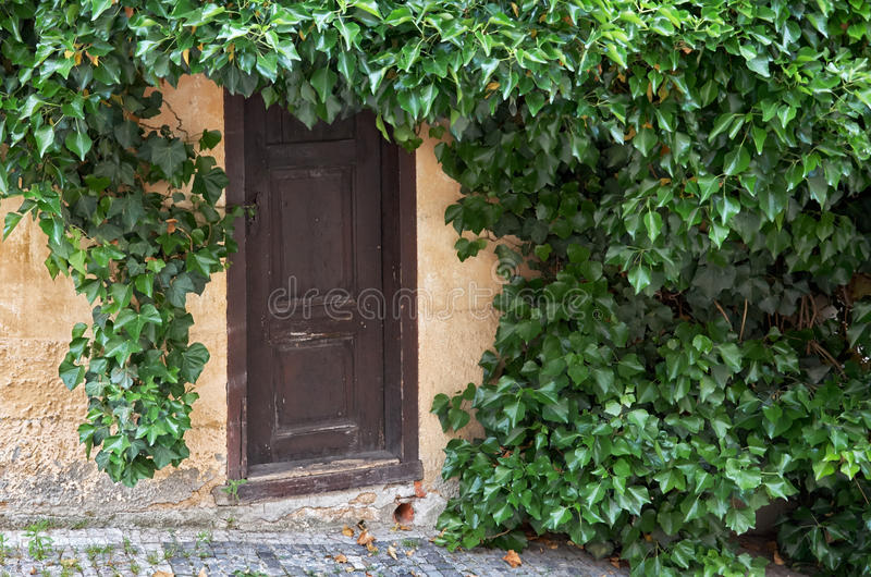 Czech Republic. The door overgrown with foliage in Prague. June 13, 2016 stock photography
