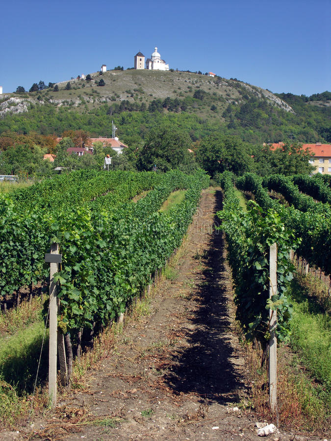 Download Mikulov With Vineyard Stock Images - Image: 30039574