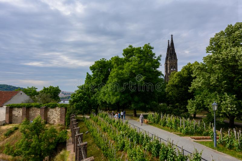 Vineyards on the slopes of the castle Vysehrad in Prague stock image
