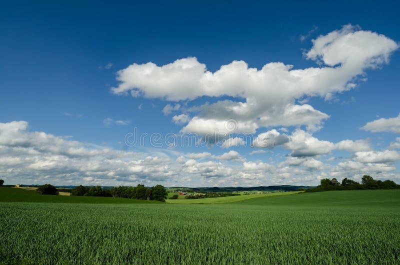 Czecha krajobraz z polem zdjęcia royalty free