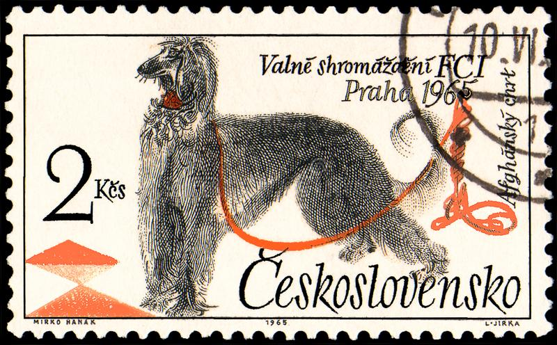 CZECHOSLOVAKIA - CIRCA 1965: a stamp, printed in Czechoslovakia, shows a Afghan Hound stock illustration
