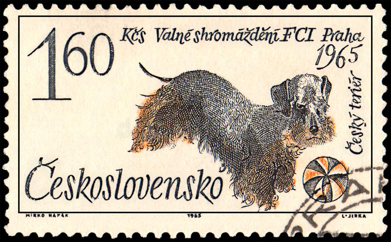 CZECHOSLOVAKIA - CIRCA 1965: a stamp, printed in Czechoslovakia, shows a czech terrier dog vector illustration