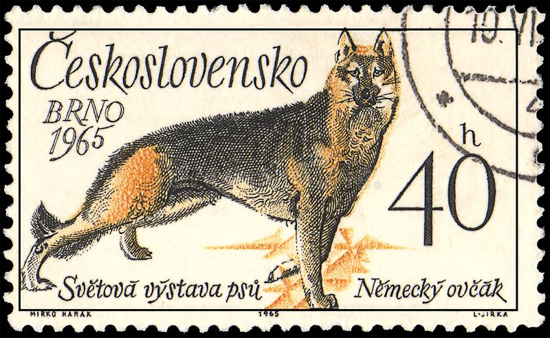 CZECHOSLOVAKIA - CIRCA 1965: a stamp, printed in Czechoslovakia, shows a German Shepherd, series World Dog Show at Brno royalty free illustration