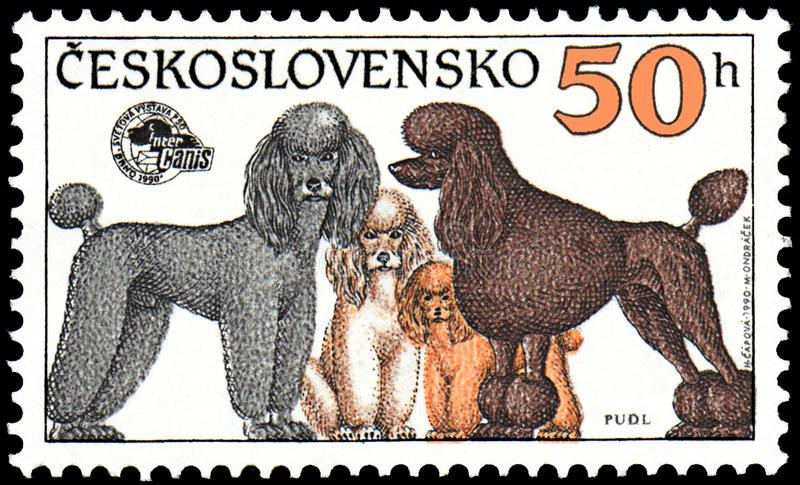 CZECHOSLOVAKIA - CIRCA 1990: stamp, printed in Czechoslovakia, shows a Poodles of different Breeds, series World Dogs Exhibition royalty free illustration