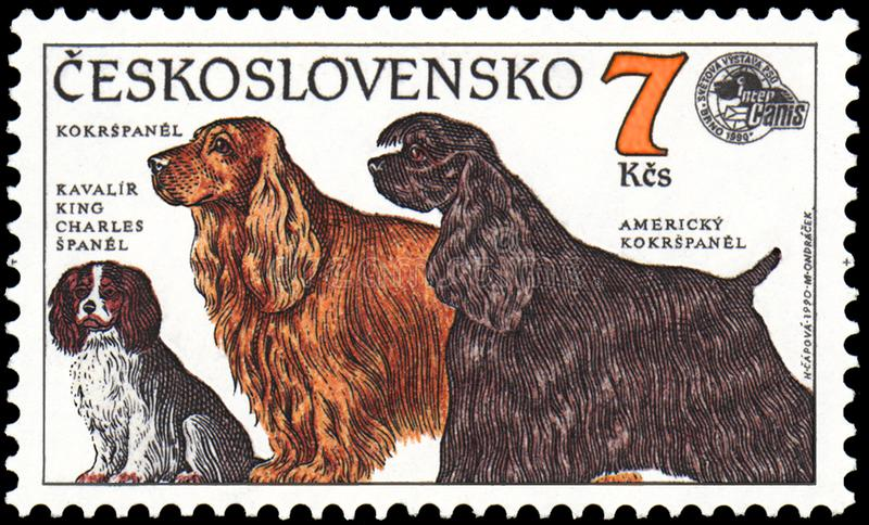 CZECHOSLOVAKIA - CIRCA 1990: stamp, printed in Czechoslovakia, shows a dogs Cavalier King Charles Spaniel, Cocker Spaniel, America royalty free illustration