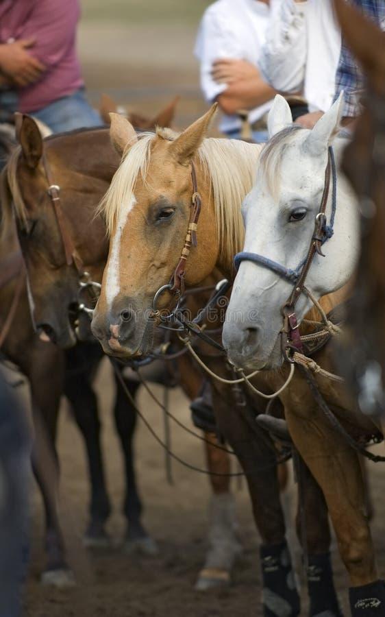 czekać na rodeo pochodzenia obraz stock
