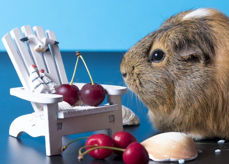Czekać na wakacje z ślicznym królikiem doświadczalnym zdjęcie stock