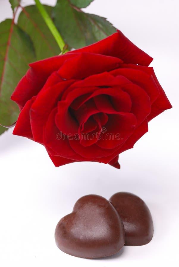 czekoladowa czerwień wzrastał fotografia royalty free